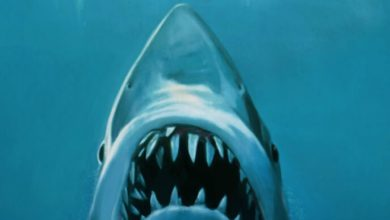 Photo of 'Inside Jaws' Shares Secrets Behind Spielberg's Shark Classic