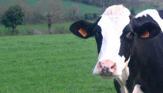 You Have to Read 'Sacred Cows' Before You Vote