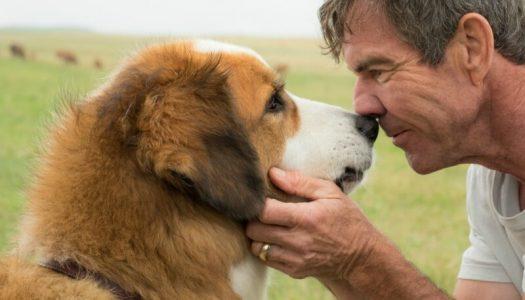 Did PETA Target 'Dog's Purpose' for Political Reasons?