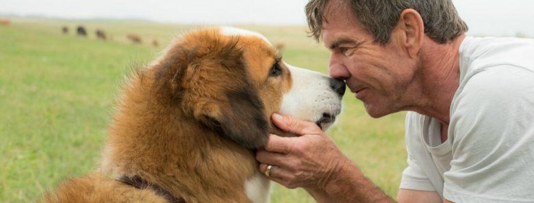 dogs-purpose-quaid