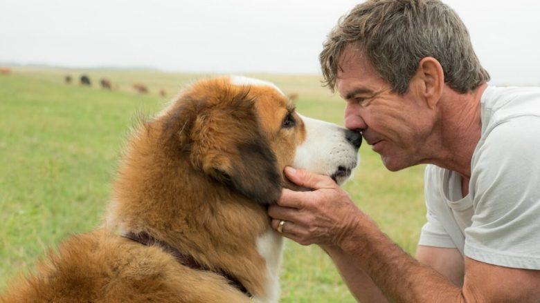 A Dog S Purpose Abuse Fake