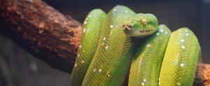 between two scorpions jim geraghty snakes