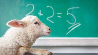 sheep doing math fact check